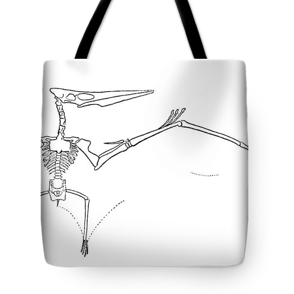 Pteranodon Longiceps Tote Bag by Science Source