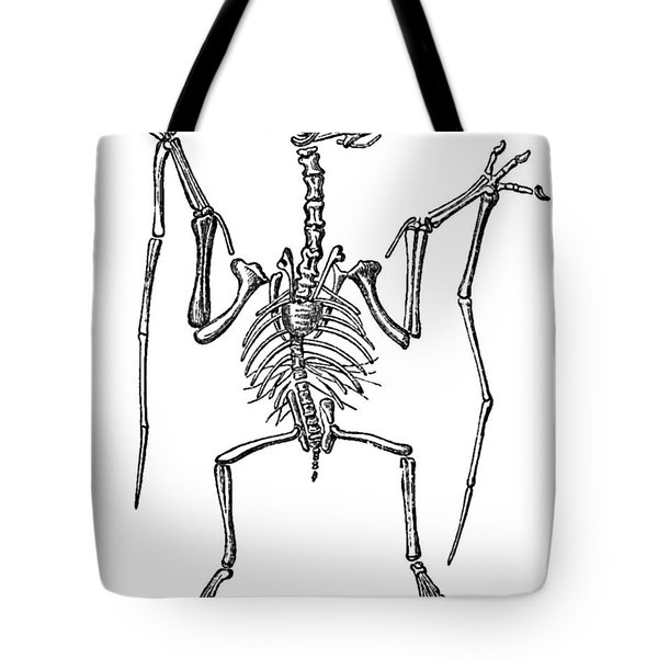Pterodactylus, Extinct Flying Reptile Tote Bag by Science Source