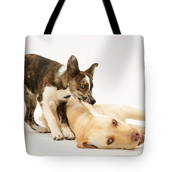 Pup Biting Lab On The Ear Tote Bag by Mark Taylor