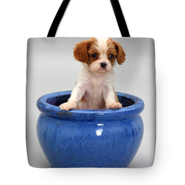 Puppy In A Pot Tote Bag by Jane Burton