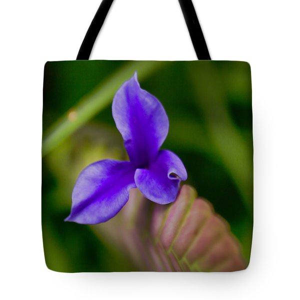 Purple Bromeliad Flower Tote Bag by Douglas Barnard