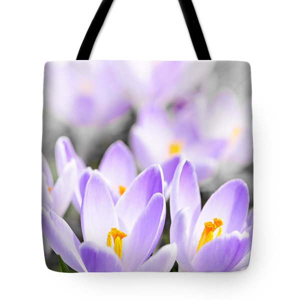 Purple Crocus Blossoms Tote Bag by Elena Elisseeva