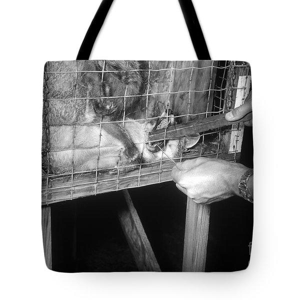 Rabid Fox, 1958 Tote Bag by Science Source