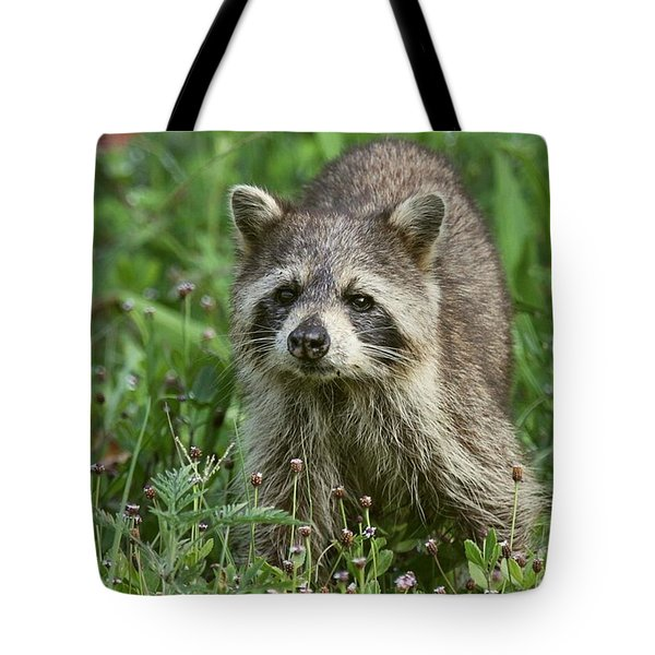 Tote Bag featuring the photograph Raccoon Looking For Lunch by Myrna Bradshaw