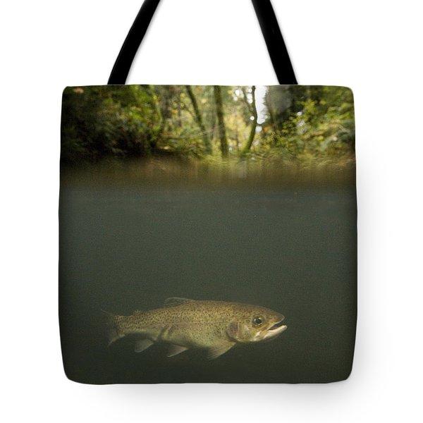 Rainbow Trout In Creek In Mixed Coast Tote Bag by Sebastian Kennerknecht