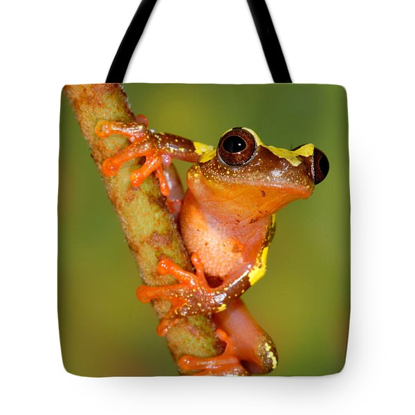 Ranita De Sarayacu  Tote Bag by F Tomasinelli and E Biggi and Photo Researchers
