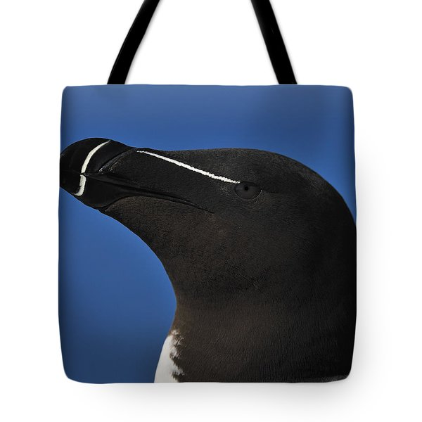 Razorbill Portrait Tote Bag by Tony Beck