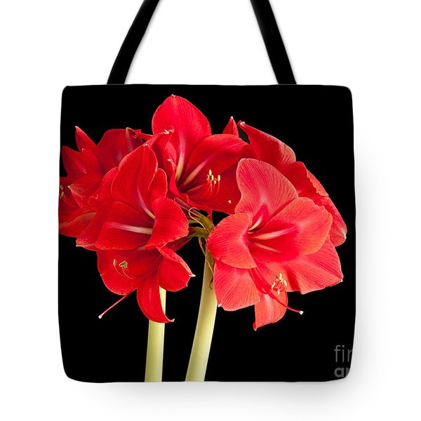 Tote Bag featuring the photograph Red Amaryliss by Les Palenik