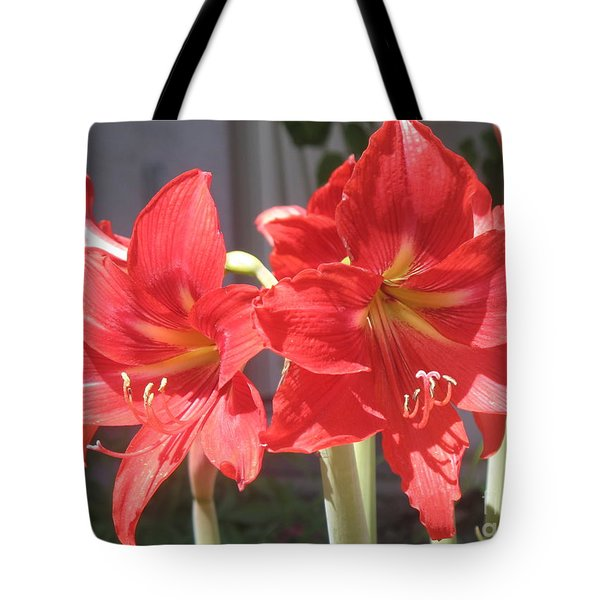 Tote Bag featuring the photograph Red Amaryllis by Kume Bryant