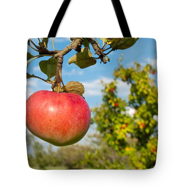 Red Apple On Branch Of Tree Tote Bag by Matthias Hauser