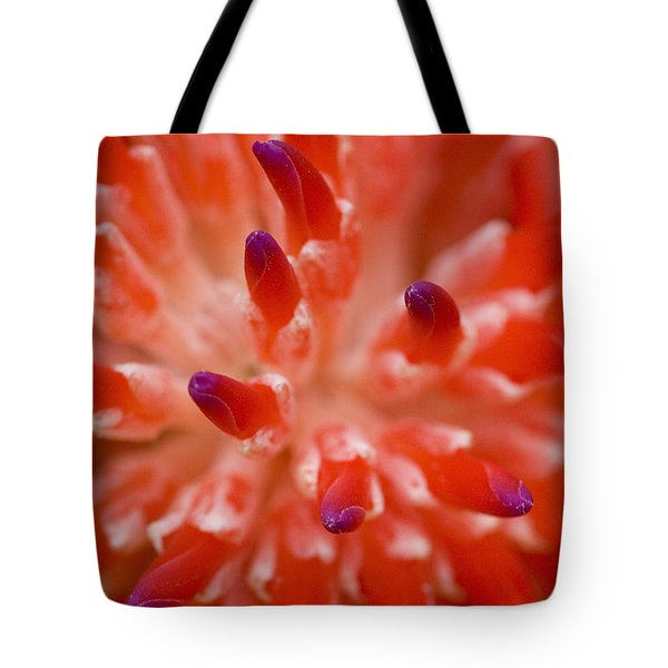 Red Bromeliad Tote Bag by Rich Franco