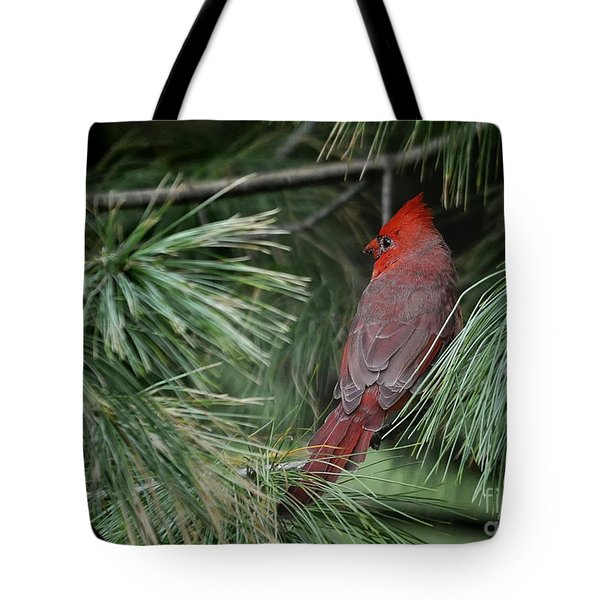 Tote Bag featuring the photograph Red Cardinal In Green Pine by Nava Thompson