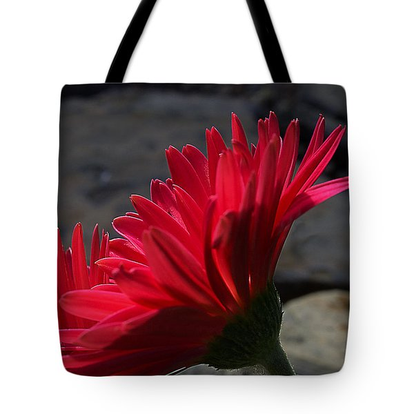 Tote Bag featuring the photograph Red English Daisy by Joe Schofield