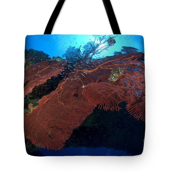 Red Fan Cora With Sunburst, Papua New Tote Bag by Steve Jones