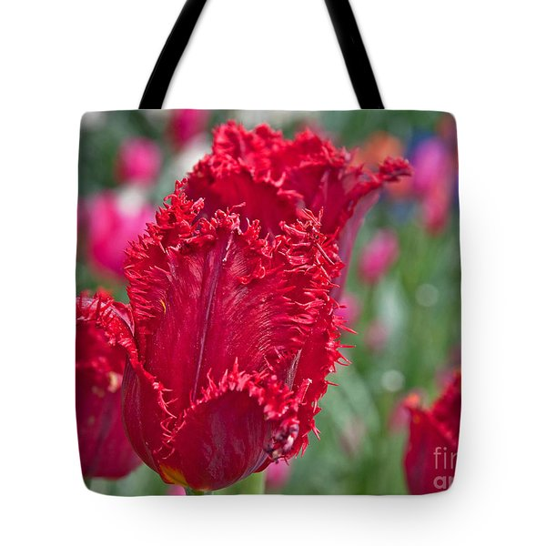 Red Fringed Tulip Flower Macro Art Prints Tote Bag
