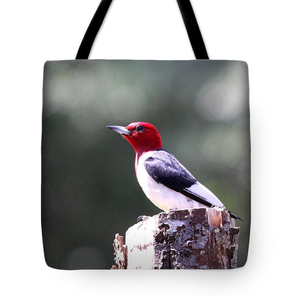 Red-headed Woodpecker - Statue Tote Bag
