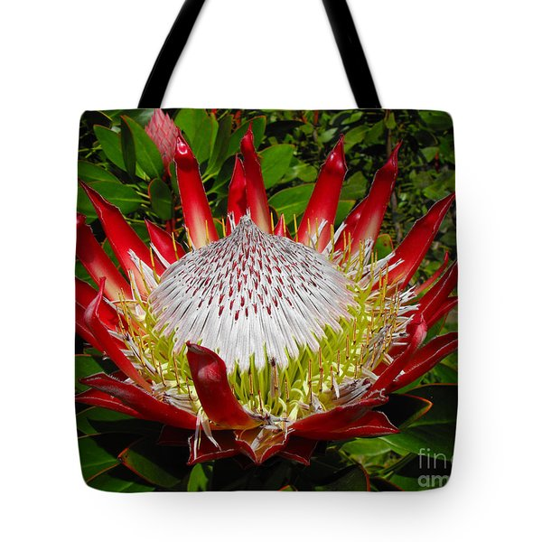 Red King Protea Tote Bag by Rebecca Margraf