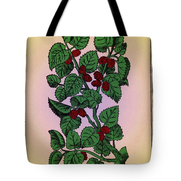 Red Mulberry Tote Bag by Science Source