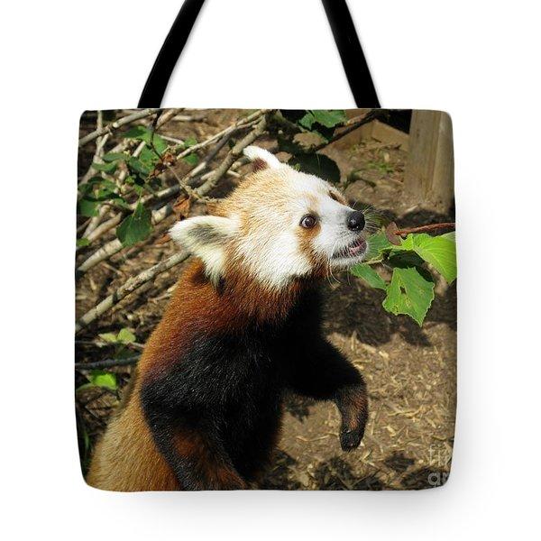 Red Panda Feeding Time Tote Bag by Ausra Huntington nee Paulauskaite