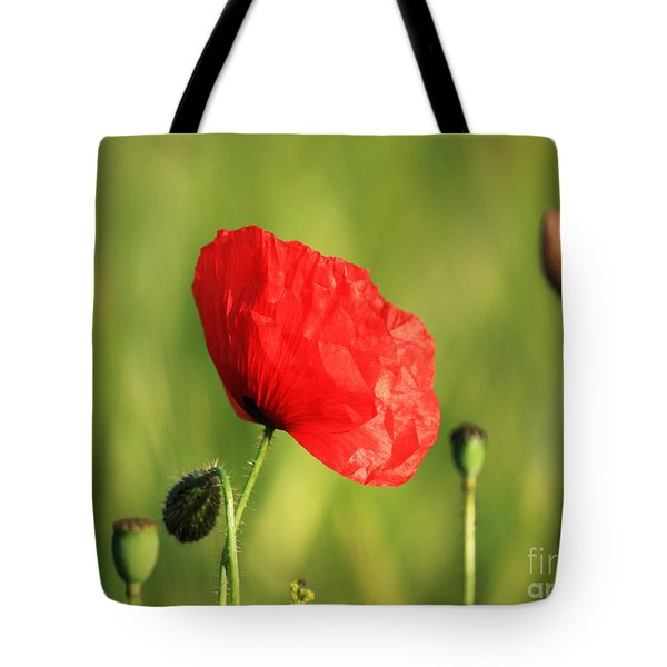 Red Poppy In Field Tote Bag by Pixel Chimp