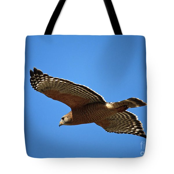 Red Shouldered Hawk In Flight Tote Bag by Carol Groenen