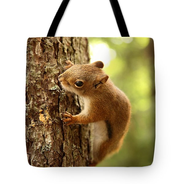 Red Squirrel Tote Bag by Ted Kinsman