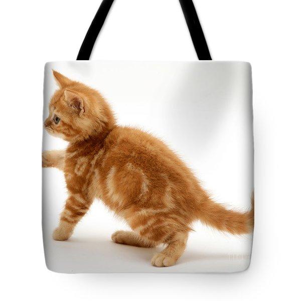 Red Tabby Kitten Tote Bag by Jane Burton