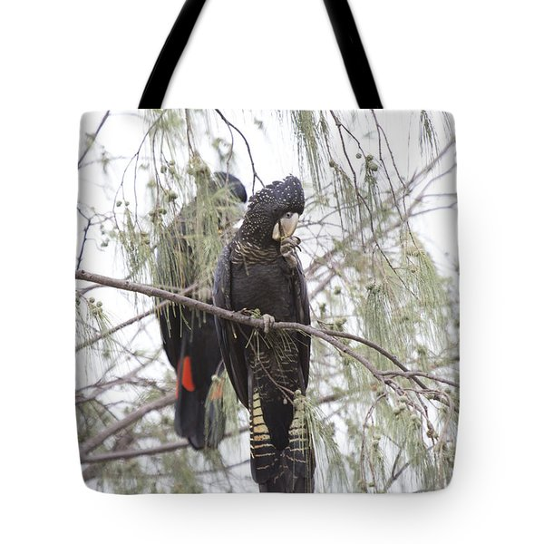 Red Tailed Black Cockatoos Tote Bag by Douglas Barnard