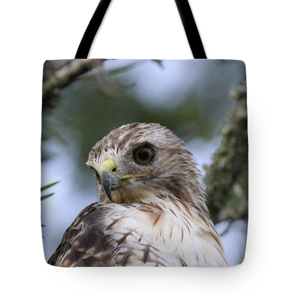 Red-tailed Hawk Has Superior Vision Tote Bag by Travis Truelove