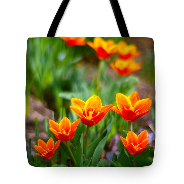 Red Tulips Tote Bag by Paul Ge