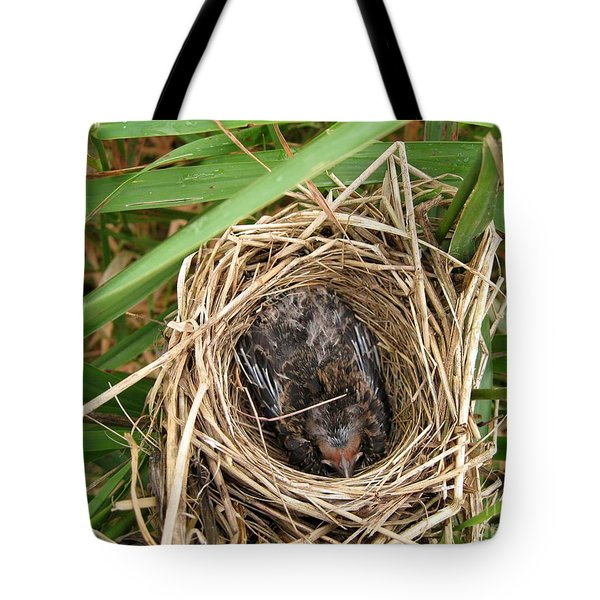 Red-winged Blackbird Baby In Nest Tote Bag by J McCombie