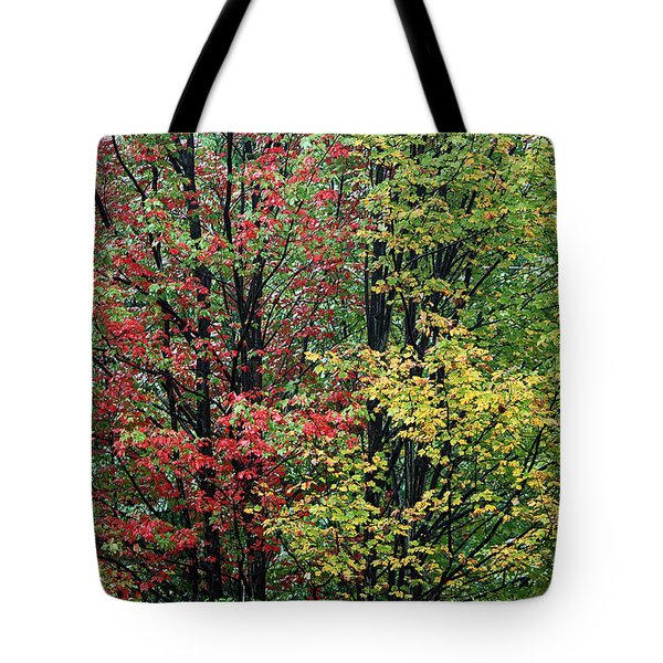 Red Yellow And Green Leaves Tote Bag