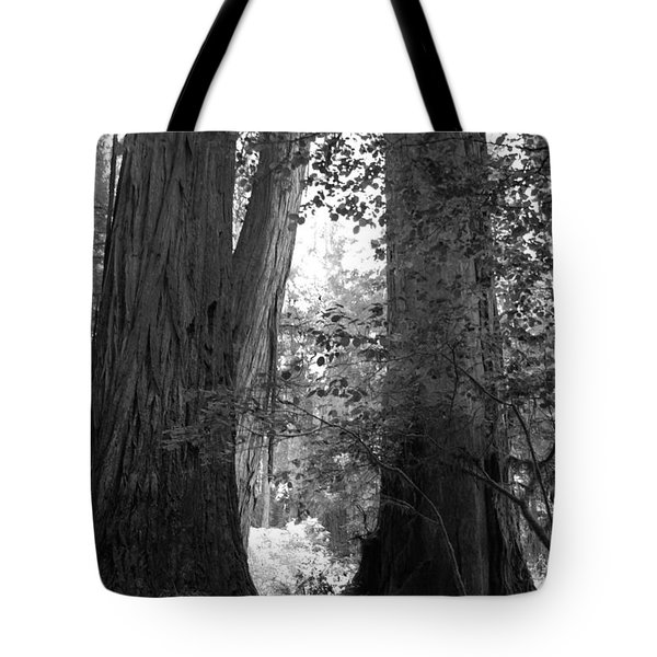 Redwood Pair Tote Bag by Kathleen Grace