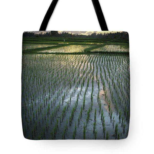 Rice Fields, Near Ubud Bali, Indonesia Tote Bag by Huy Lam