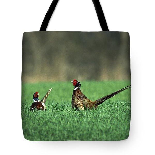 Ring-necked Pheasant Phasianus Tote Bag by Konrad Wothe