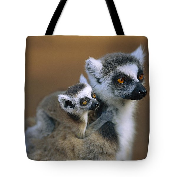 Ring-tailed Lemur Mother Carrying Baby Tote Bag by Cyril Ruoso