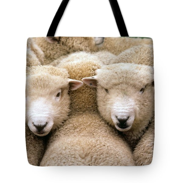 Romney Sheep Tote Bag by Gregory G Dimijian and Photo Researchers