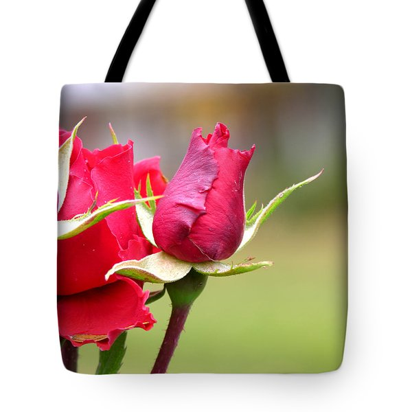 rosa 'Proud Mary' 2964 Tote Bag