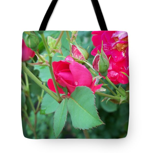 Rose Bud With Water Droplet Tote Bag