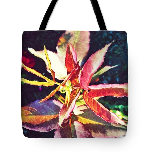 Rosy Glow - Rose Leaves Afternoon Light Tote Bag