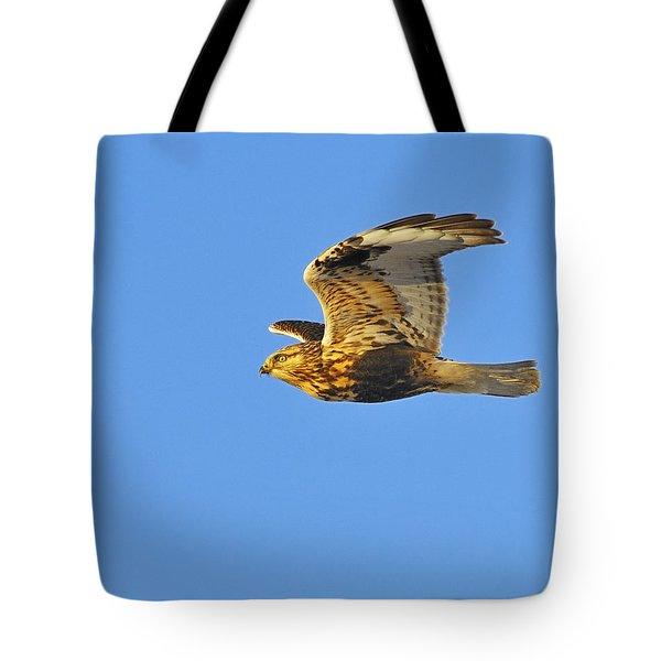 Rough-legged Hawk Tote Bag by Tony Beck
