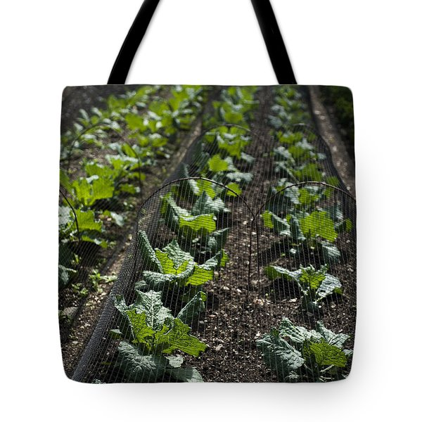 Rows Of Cabbage Tote Bag by Anne Gilbert