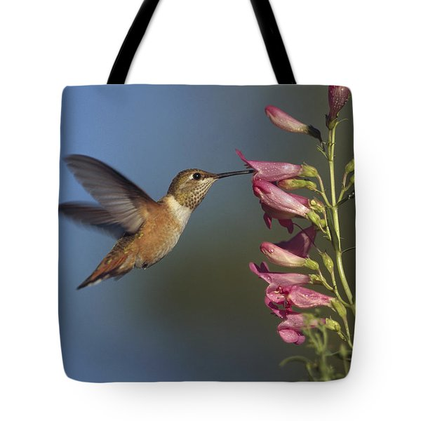 Rufous Hummingbird Feeding On Flowers Tote Bag