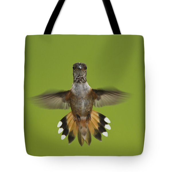 Rufous Hummingbird Selasphorus Rufus Tote Bag