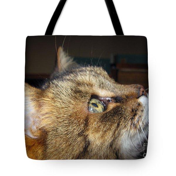 Tote Bag featuring the photograph Runcius- The King Kitty by Ausra Huntington nee Paulauskaite