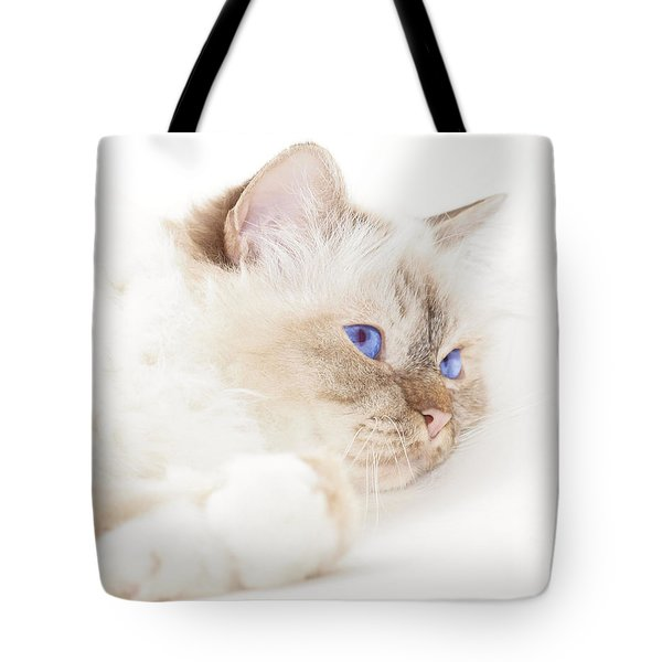 Sacred Cat Of Burma Tote Bag by Melanie Viola
