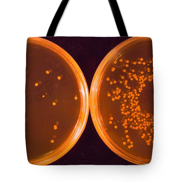 Salmonella Tote Bag by Science Source