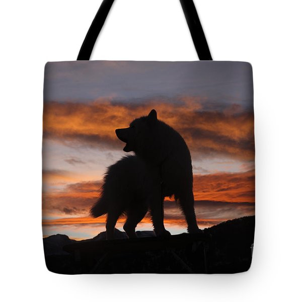 Samoyed At Sunset Tote Bag by Kent Dannen and Photo Researchers