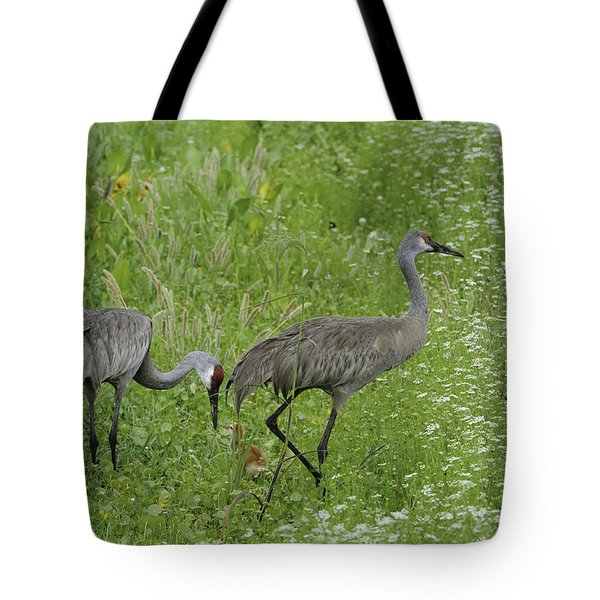 Tote Bag featuring the photograph Sandhill Cranes And Chick by Bradford Martin