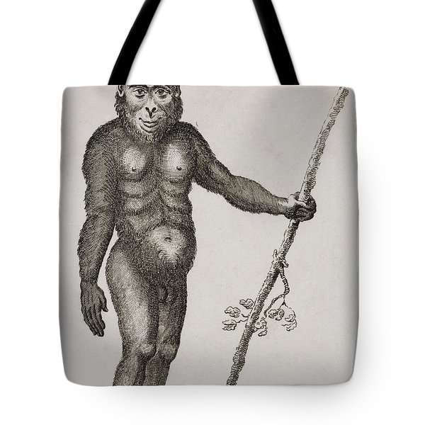 Satyrus, Ourang Outang. Engraved By Tote Bag by Ken Welsh